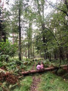 spacer w lesie z dziećmi