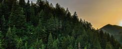 Drzewa a środowisko