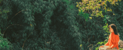 Joga w lesie