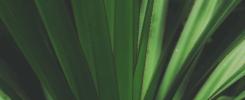 Roślinny eksperyment