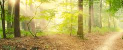 Techniki oddychania - ćwiczenia oddechowe